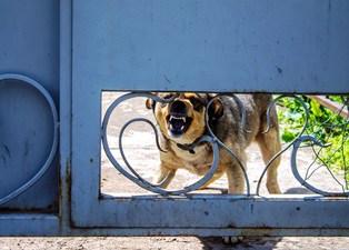 dog bite insurance claims Van Sant Law